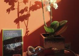 Praxis für Stressbewältigung Impressionen