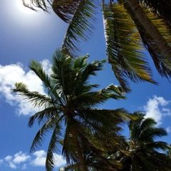 Palmen im Wind-IMG_2572